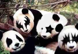 Kiss Panda's:)