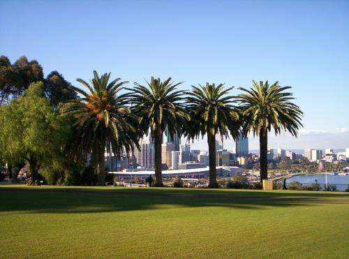 Australia wallpaper with a royal palm, a business district, and a resort called Perth, Australia