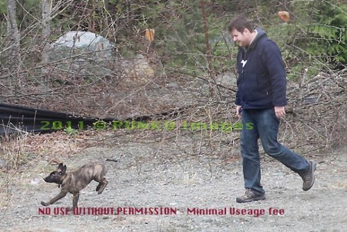 Pic of Rob's new dog Bear walking with Kristen's Assistant John!
