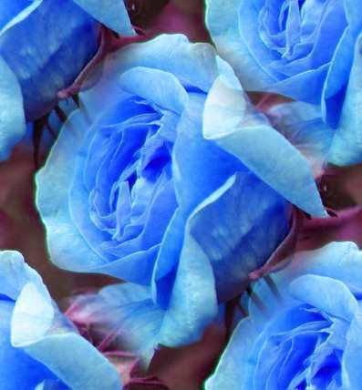 rosas for you, Berni