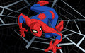 spidey1 - cartoon-fanatics photo