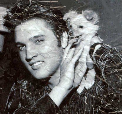Elvis Presley wallpaper probably with an opossum, a raccoon, and a common raccoon entitled Elvis Rare Photo