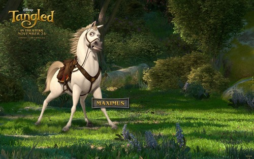 Maximus, Flynn's horse