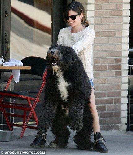 Rachel Bilson with Huge Dog!