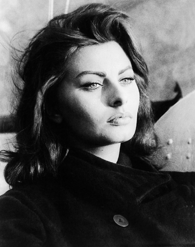 索菲亚·罗兰 壁纸 possibly with a portrait titled Sophia Loren