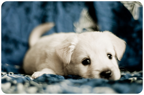 Sweet puppies - dogs Photo