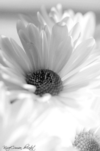 White цветок