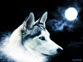 beautiful wolf background - fire-and-ice-the-wolf-pack wallpaper