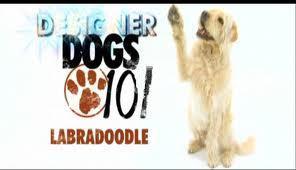 Anjing 101 pic