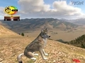 the pic of the wolf quest game online