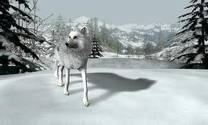 the Anubian's wolf pack wallpaper titled white wolf on a hunt