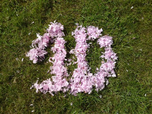 1D = Heartthrobs (Enternal Love 4 1D & Always Will) 1D In Flowers! Love 1D Soo Much! 100% Real ♥