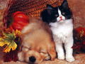 Babies - babies-pets-and-animals wallpaper