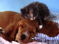 babies-pets-and-animals - Babies wallpaper