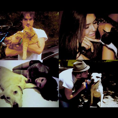 Cute Nian & Pets