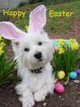 Happy Easter Dear Berni ❤❤❤ - yorkshire_rose photo