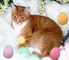 Happy Easter Susie