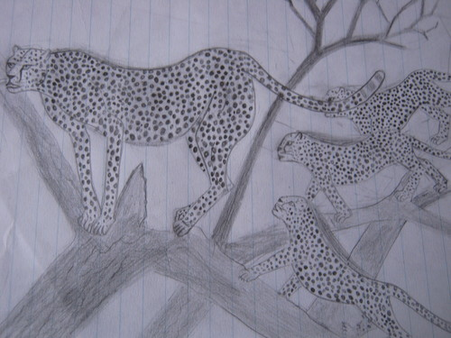 My drawings:Animals