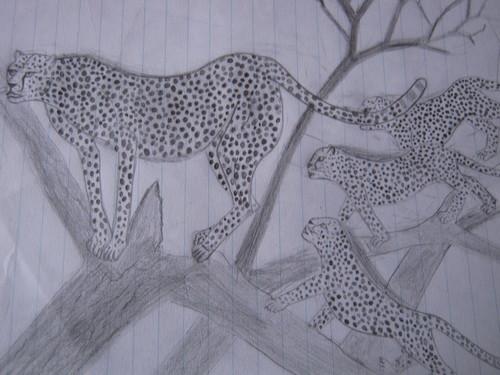 My drawings:Animals