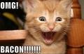 OMG!!!! BACON!!!!!