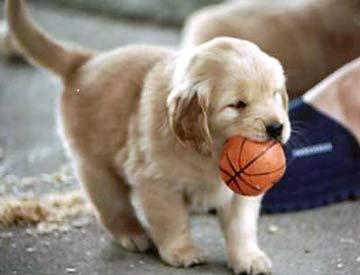Rar cachorro, filhote de cachorro Wants basquetebol, basquete
