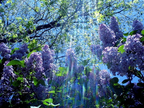 The fragrance of spring