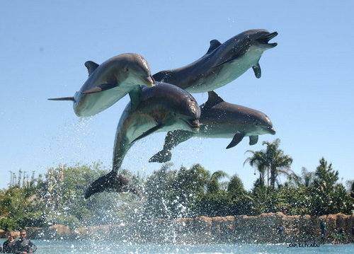 Discovery Cove <333