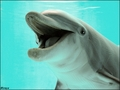 Dolphin - dolphins photo