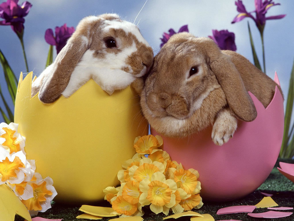 Happy Easter - Babies Pets and Animals Wallpaper (21354549) - Fanpop