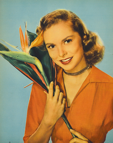 filmes clássicos wallpaper possibly with a grainfield, a corn, and a alho-poró entitled Janet Leigh