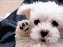 CUTE PUPPY!!