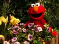 Elmo - elmo photo