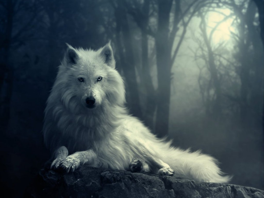 wolf wallpaper yorkshire - photo #2