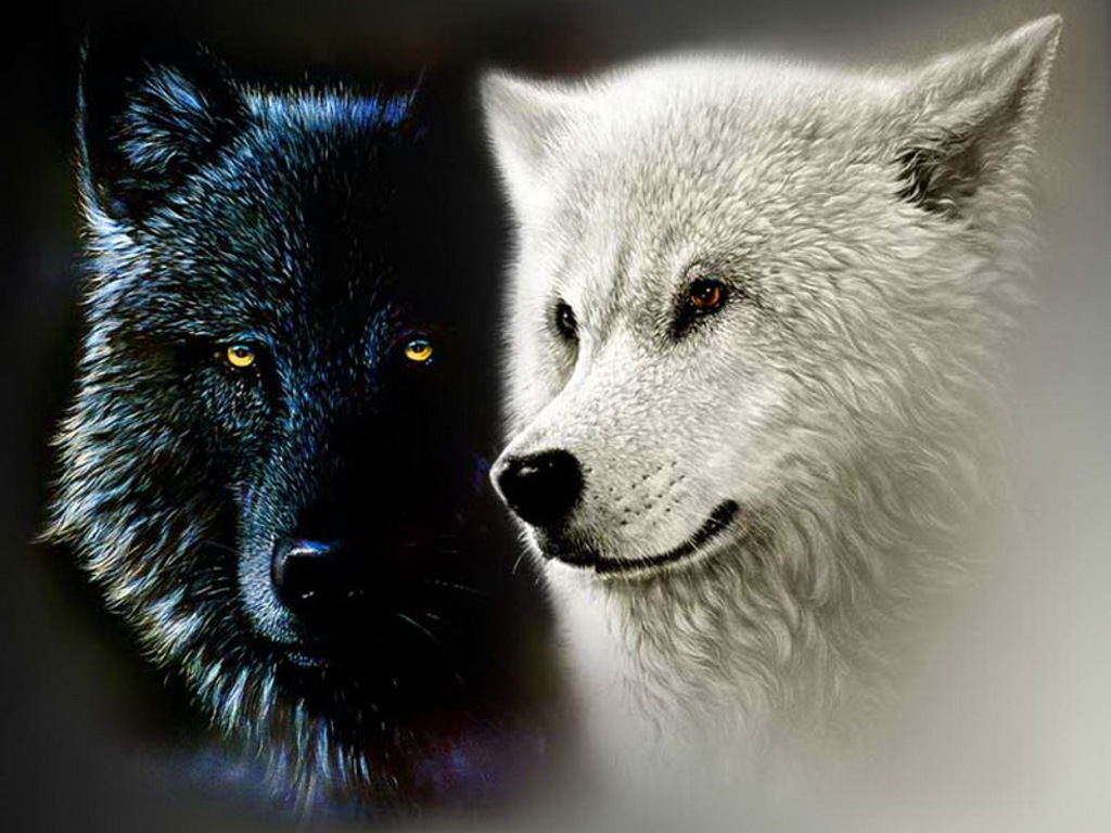 Black and White serigala, wolf