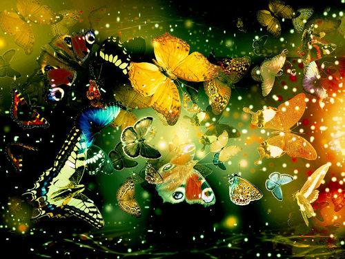Elegant 나비 바탕화면