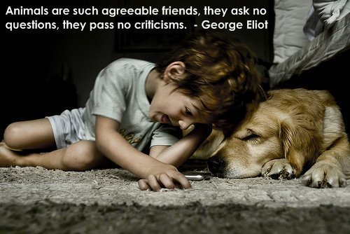 dog quotes - teddybear64 Photo