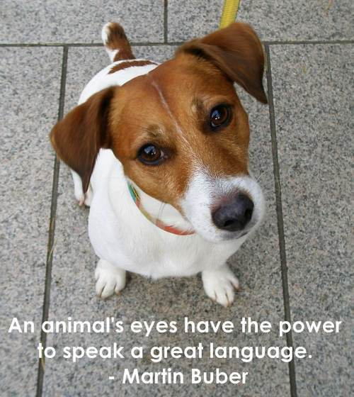 Teddybear64 puppy quotes
