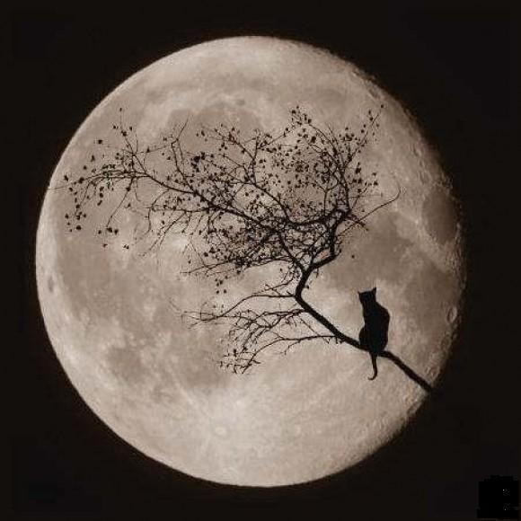 Full Moon Cat