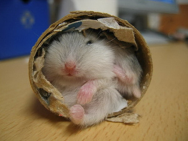 funny hamster pictures for kids - photo #8