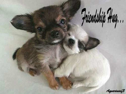 Friendship hugs for Frances <(*.*<)