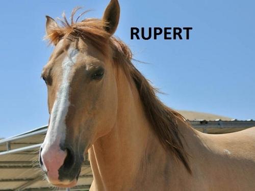 My Kuda
