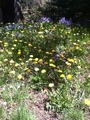 Springtime in my front/back yard - peterslover photo