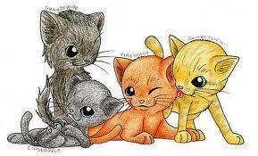 gatos guerreiros
