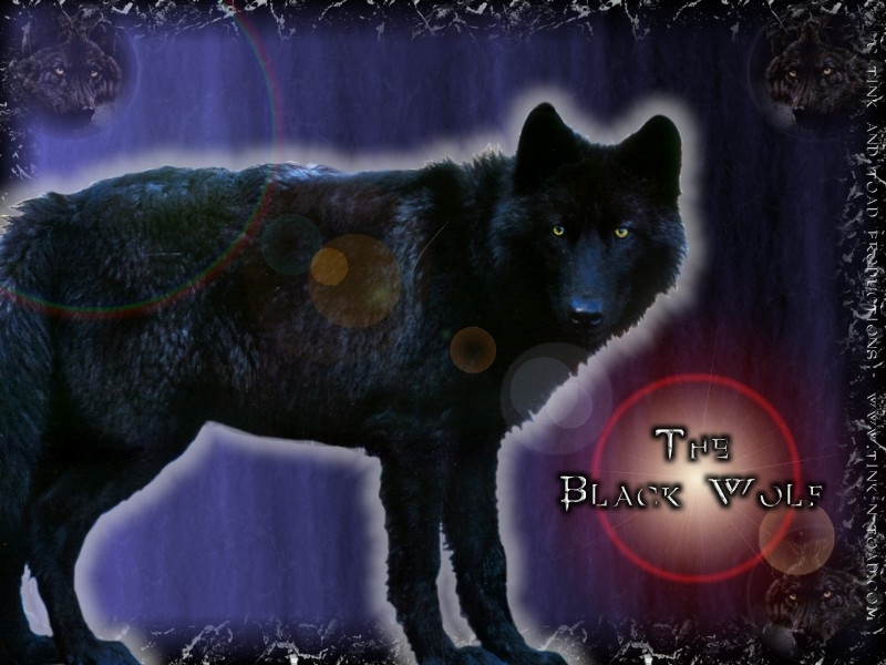 black wolves images black wolf hd wallpaper and background