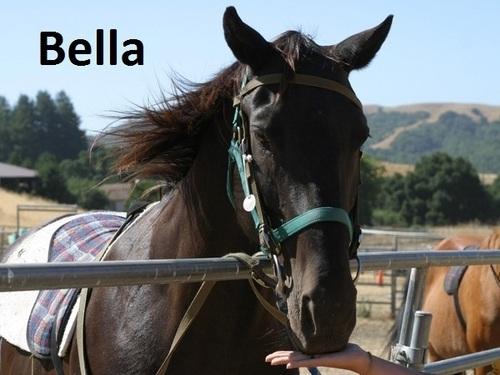 lebih Kuda