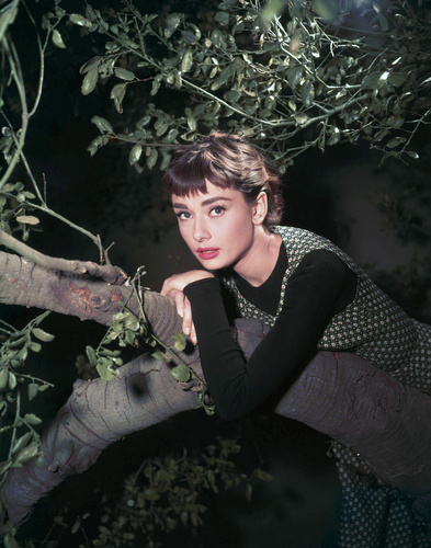 Audrey Hepburn wallpaper possibly containing a spearfish, a lungfish, and a sign called Audrey Hepburn