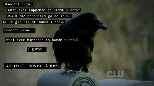 Damon's crow.