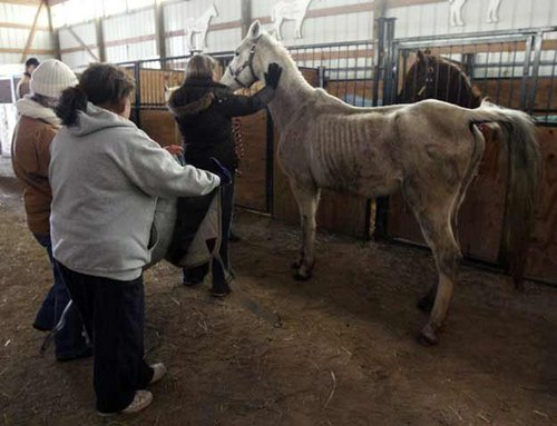 Horse Neglect