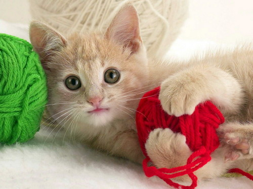 Kniting Kitty