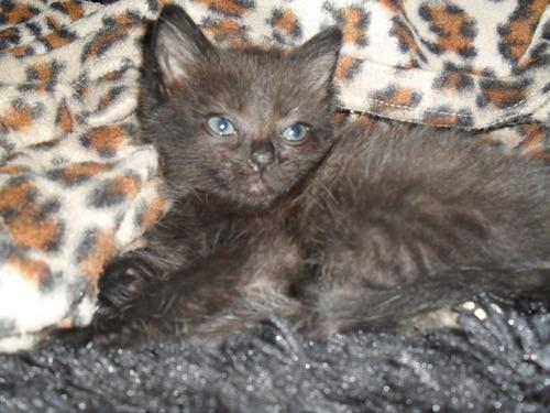 My Kitten, Pepsi!